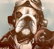 Dogfighting Dog by André Persechini