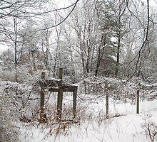 The Garden gate by Carolyn Clark