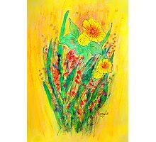 Daffodils.... Photographic Print