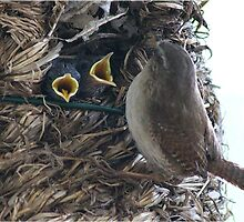 Me please! Baby wrens at feeding time by Rivendell7