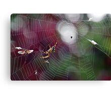 A Successful Spider.....Dorset UK Canvas Print