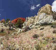 Springtime At Red Rock Canyon by James Eddy