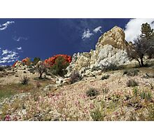 Springtime At Red Rock Canyon Photographic Print