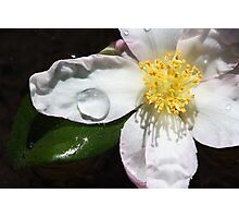 Water on Flower Photographic Print