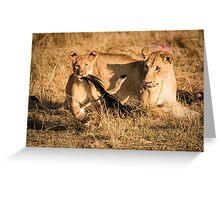 Pride Playtime - Masai Mara, Kenya Greeting Card
