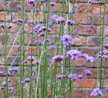 Purple Flower Background Sticker