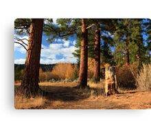 Ponderosa Path Canvas Print