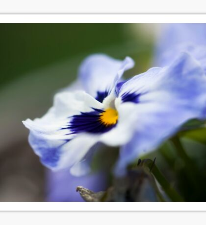 Blue Pansy II Sticker