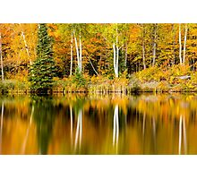 White Birch Trees Reflections in Autumn Photographic Print
