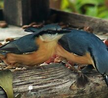 Nuthatches on the bird table by missmoneypenny