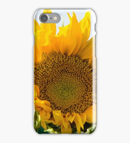 Israel, Sunflower in a field  iPhone Case/Skin