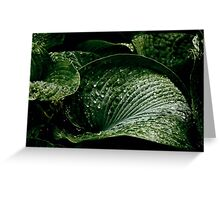 Hostas on a rainy day Greeting Card