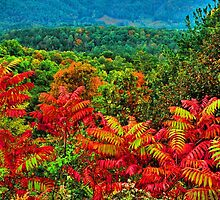 SUMAC, FOOTHILLS PARKWAY by Chuck Wickham