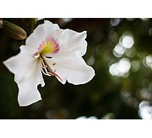 White Born Photographic Print