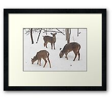 Whitetail Deer In Snowy Woods Framed Print
