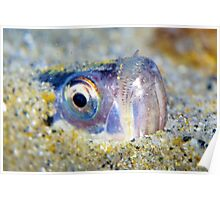 Buried Sandfish is watching you!  Poster