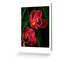 Orchids Glow Greeting Card