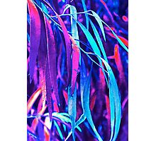 Fantasy Eucalypt Leaves Photographic Print