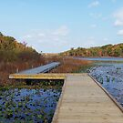 Punderson Boardwalk by Monnie Ryan