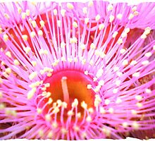 Inside the small Gum flower by EdsMum