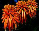 La Jolla Aloe 38 by Larry Costales