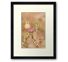 Species of butterfly in the Nymphalidae famil Framed Print