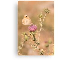 Species of butterfly in the Nymphalidae famil Canvas Print