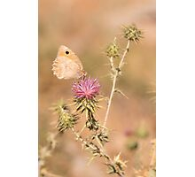 Species of butterfly in the Nymphalidae famil Photographic Print