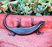 A welcome lizard by Elizabeth Kendall
