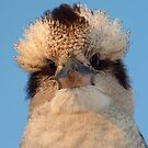 Laughing Kookaburra by stevealder