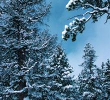 Winter Wonderland Sticker