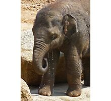 Baby Asian Elephant Enjoying A Drink Photographic Print