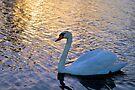 Sunset Swim by ©Dawne M. Dunton