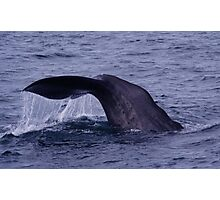Sperm Whale Diving Photographic Print