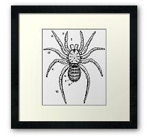 Vintage Spider Diagram Framed Print