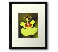 Yellow Orchid Macro Framed Print