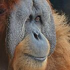 Sumatran Orang-utan Deep In Thought by Margaret Saheed