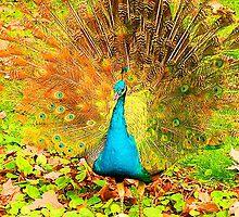 Peacock Junior Displaying by Margaret Saheed
