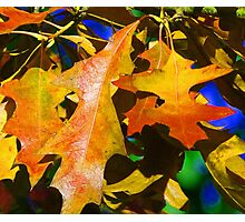Glowing Autumn Photographic Print