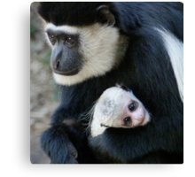Mother And Baby Colobus Canvas Print
