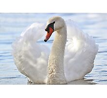 Elegance of the swan Photographic Print