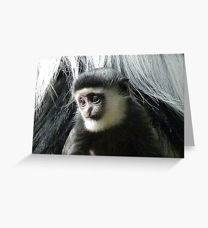 Pensive Baby Colobus Greeting Card