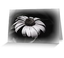 echinacea of the season Greeting Card