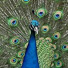 King Of The Peacocks 2 by Leanne Allen