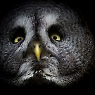 a great gray owl by Brett Watson Stand By Me  Ethiopia