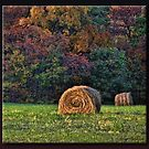 Harvest Time by Sheryl Gerhard