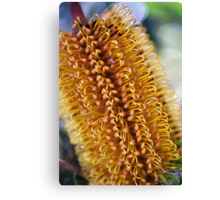 Banksia Living Candle Canvas Print