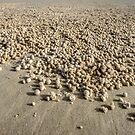 Sand Bubbles - Moreton Is. Qld Australia by Beth  Wode