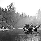 Fog Filled Morning by Jennifer Bishop