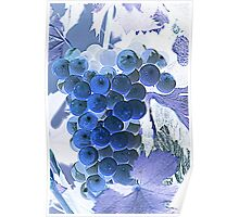 ripe grape vineyard will Poster